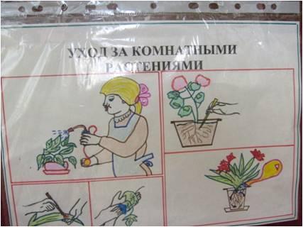 за комнатными растениями